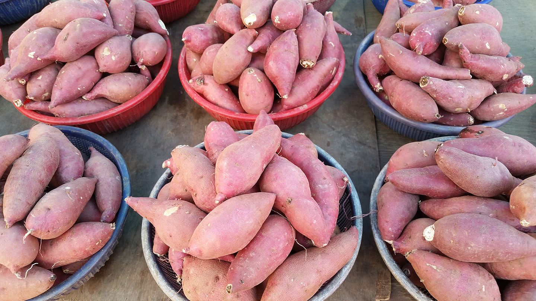 Korea Trip - Sweet Potato
