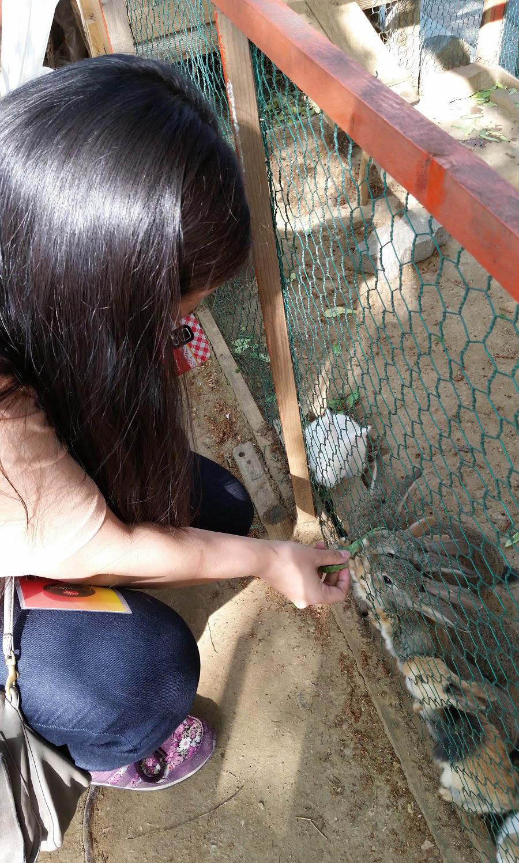 Paju - Amusement Park Bunnies