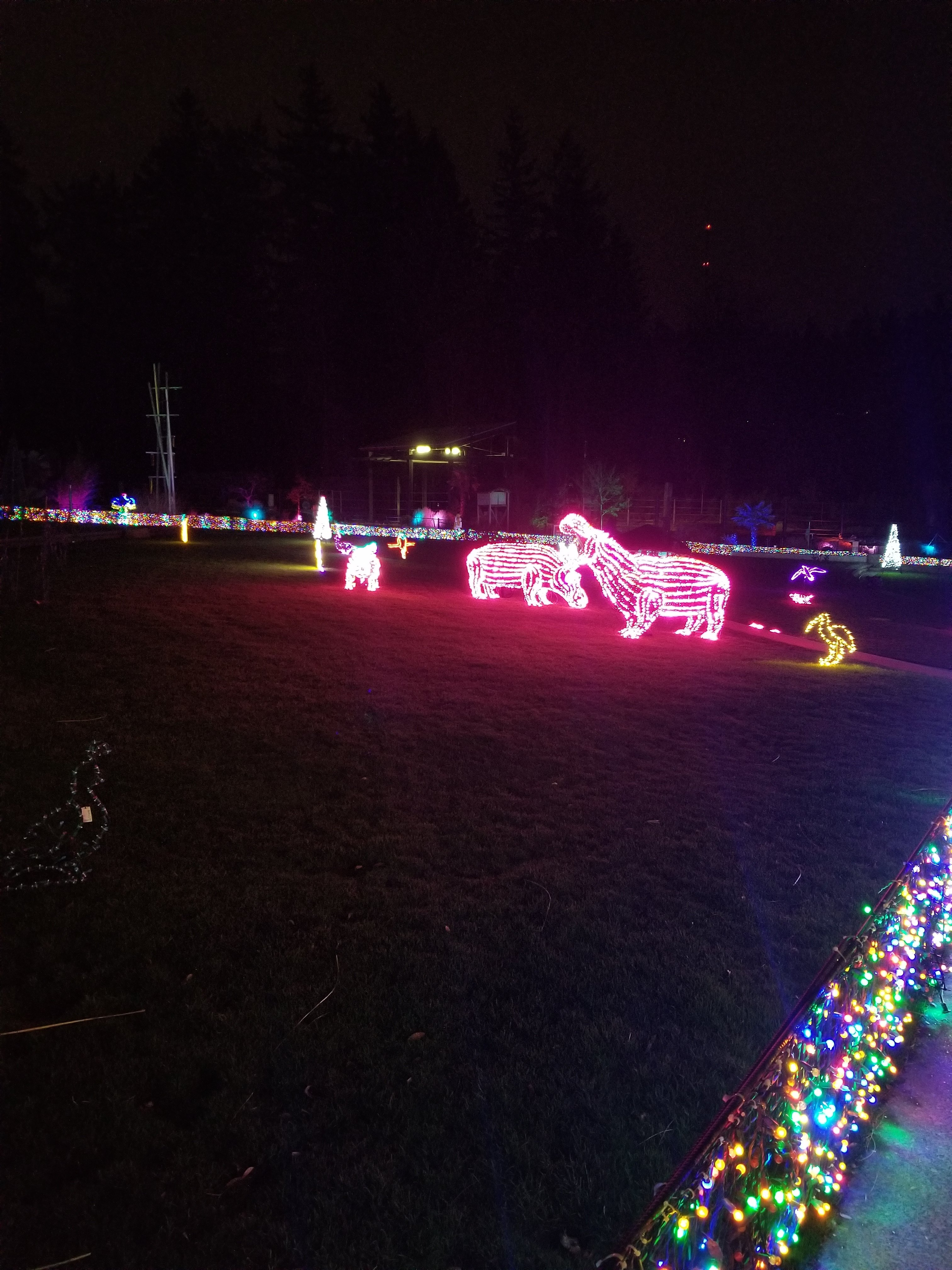 Thanksgiving Visit to Portland - Zoo Lights Concert Lawn