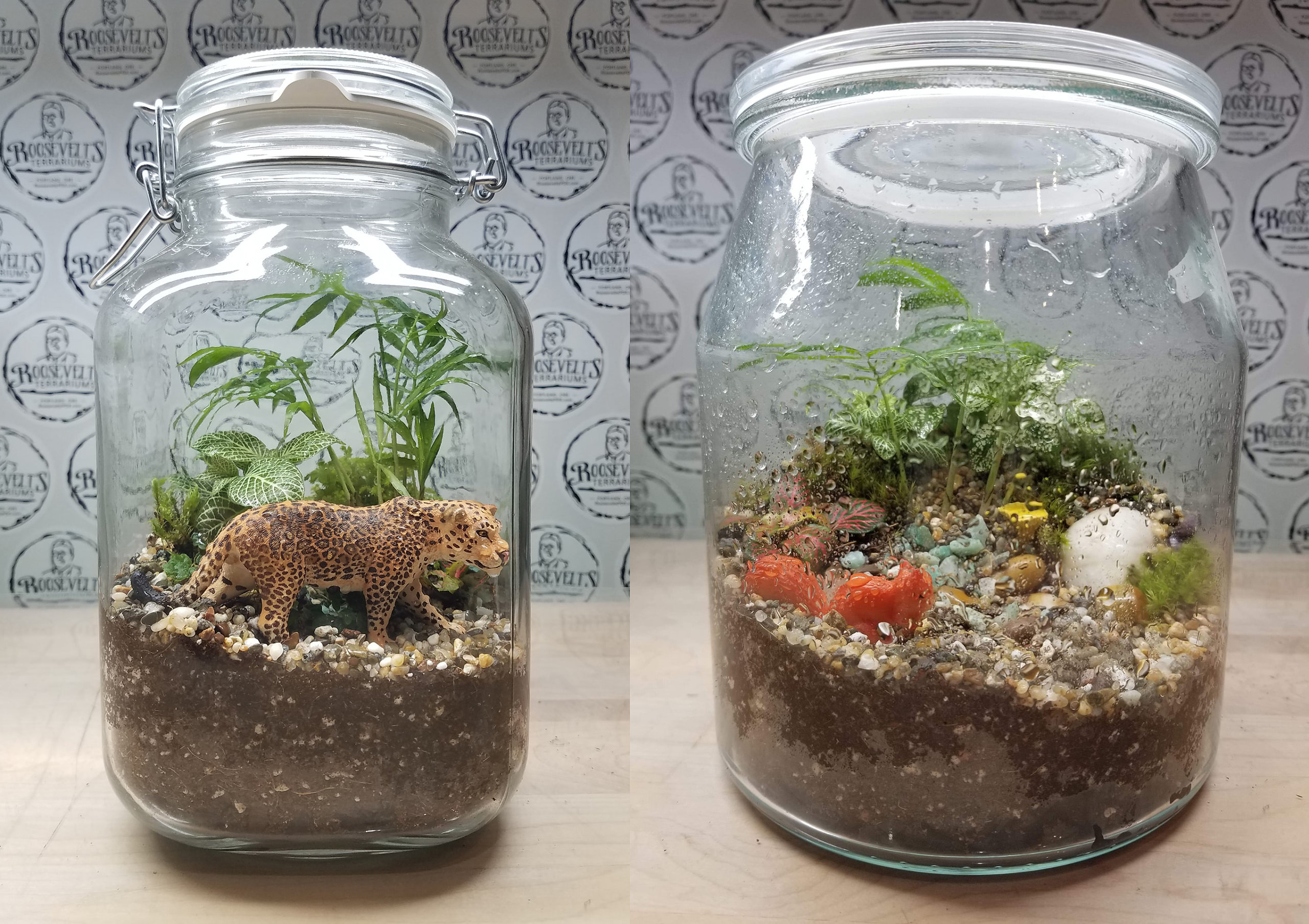 Roosevelt's Terrariums - Finished